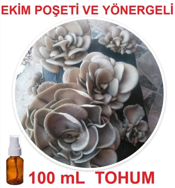 100 mL İstiridye Kayın Kavak Mantarı Tohumu + Ekim Poşeti + Yönerge fiyatı