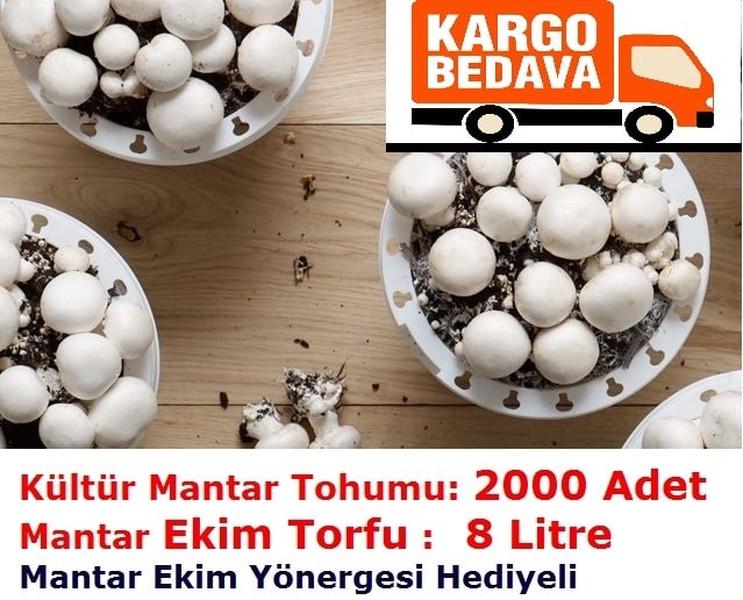2000 Adet Kültür Mantarı Tohumu ve 8 Litre Mantar Kompostu (Mantar Ekim Torfu)
